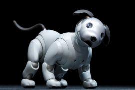 Robot anjing Aibo kembali hadir