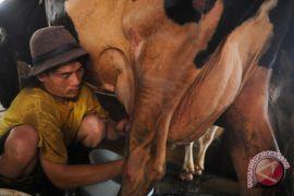 SVC Buleleng kampanyekan perlindungan sapi untuk kehidupan