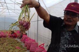 Harga bawang merah di Pasar Flamboyan merangkak naik