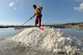 Rp135 miliar kembangkan garam Flores Timur