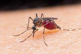 Perda eliminasi malaria turunkan kasus