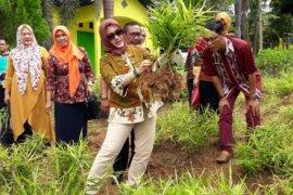 Kotabaru kembangkan tanaman Toga