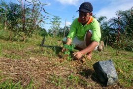 Kelompok tani Sinar Mas kembangkan tanaman moringa