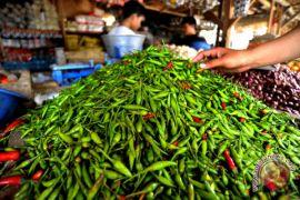 Harga cabai di Padang naik Rp4.000