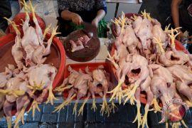 Harga daging ayam mulai naik di Gorontalo Utara