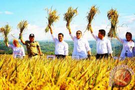 Kementan: Garut surplus beras 71.593 ton