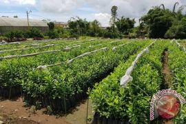 Balitbangtan siap kembangkan benih komoditas strategis