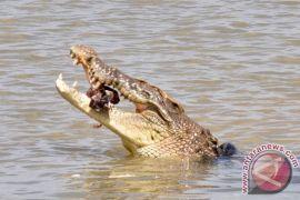 Pastur tewas diserang buaya saat pembaptisan di danau Ethiopia