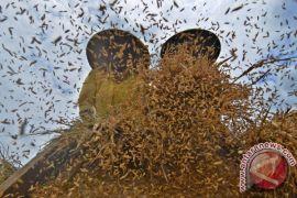 Lampung tak boleh impor beras