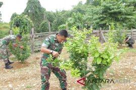 TNI ajak masyarakat Nagan kembangkan jeruk lemon