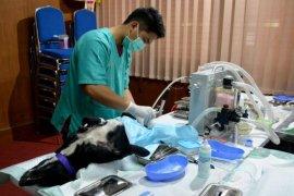 Dinas Pertanian Denpasar vaksinasi satwa cegah rabies