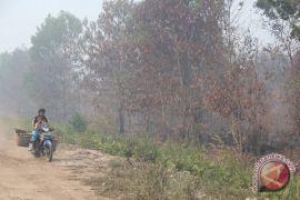 Gubernur Kalteng: larangan membakar lahan jangan persulit petani