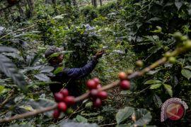 Perhutanan sosial sudah terealisasi 2,1 juta hektare