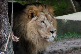 Lima hewan buas kabur dari kebun binatang Jerman