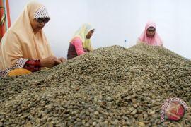 Makin diminati, ekspor Kopi Gayo naik 85,71 persen