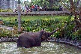 Bali Zoo tawarkan promo khusus HUT ke-73 RI