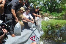 Bupati Tabanan sebarkan 15.000 ekor benih ikan nila