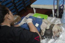 Distan Denpasar lakukan vaksinasi rabies