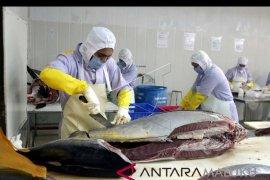 Maluku ekspor 0,99 ton tuna fresh whole ke Jepang