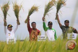 Mentan: stok beras Bulog 1,1 juta ton