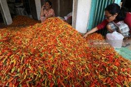 Harga cabai di pasar Jatim sudah turun