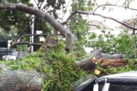 Pemkot Bandung pangkas pohon tua antisipasi bencana musim hujan