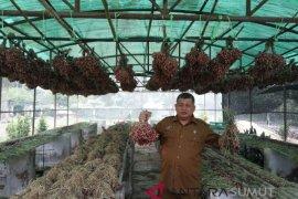 Sumut kembangkan bibit bawang merah dorong produksi