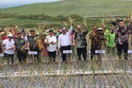 Mentan panen perdana bawang putih di Banyuwangi