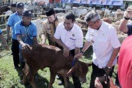 Panen Anak Sapi, Provinsi Lampung Swasembada Protein
