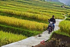 Jokowi: dana desa berhasil bangun jalan 123.000 km
