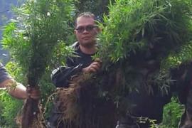 Polda Bengkulu temukan satu hektare ladang ganja