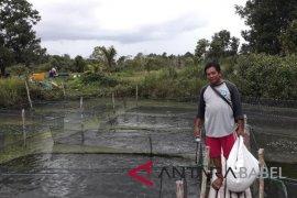 Mitra binaan PT Timah Toboali kembangkan pembibitan ikan
