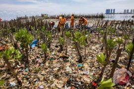 Mangrove pantai utara Jawa rusak parah, Luhut bilang harus diperbaiki