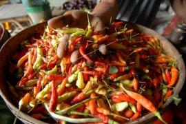 Harga cabai rawit di Ambon turun