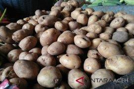 Kebutuhan kentang di Banda Aceh 7 ton/minggu