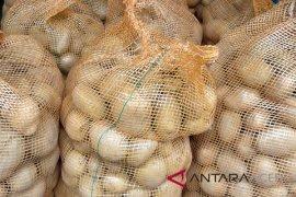 Permintaan kentang Aceh Tengah capai tiga ton/hari