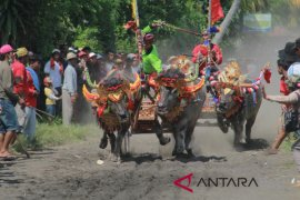 All out, Pemkab Jembrana bangun sektor pariwisata
