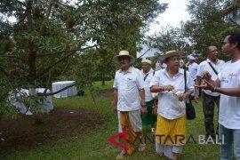 Rai Mantra ikut Festival Makan Durian di Tajun-Buleleng