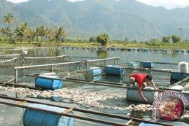 Kedalaman KJA di Samosir tidak memenuhi peraturan