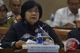KLHK usut kasus kematian gajah di Aceh