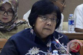 Menteri Siti minta segera evakuasi buaya muara di Priok