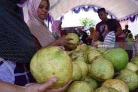 Warga Magetan Gelar Festival Kampoeng Pamelo (Video)