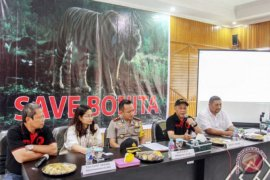 Populasi Harimau Sumatera diperkirakan tersisa 400 ekor