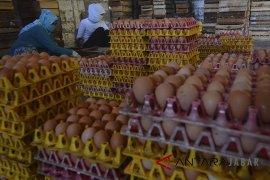 Produksi Telur Nasional