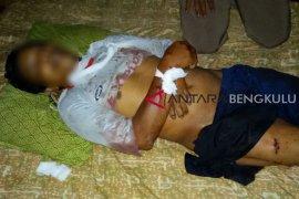 Petani Mukomuko tewas diserang babi hutan