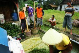Kementan dorong petani gunakan pestisida nabati