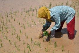 Indonesia butuh tanah kualitas sehat