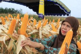 Pangan lokal dinilai mampu kurangi konsumsi beras