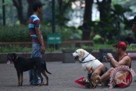Memiliki hewan peliharaan bagus untuk jantung