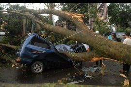 BPBD Lebak minta pengemudi kendaraan waspadai pohon tumbang